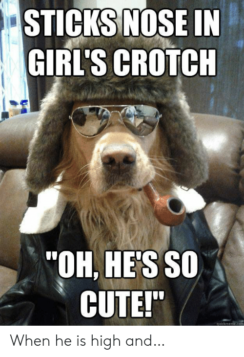 """Cute, Girls, and Sticks: STICKS NOSE IN  GIRL'S CROTCH  """"OH, HE'S SO  CUTE!""""  quickmeme.com When he is high and…"""