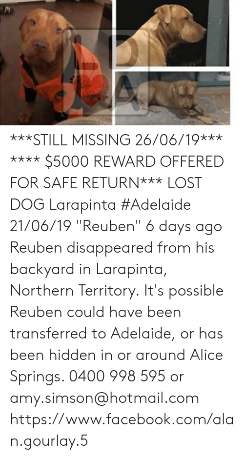 """Facebook, Memes, and Lost: ***STILL MISSING 26/06/19***  **** $5000 REWARD OFFERED FOR SAFE RETURN***  LOST DOG Larapinta #Adelaide 21/06/19 """"Reuben""""  6 days ago Reuben disappeared from his backyard in Larapinta, Northern Territory. It's possible Reuben could have been transferred to Adelaide, or has been hidden in or around Alice Springs.  0400 998 595 or amy.simson@hotmail.com https://www.facebook.com/alan.gourlay.5"""