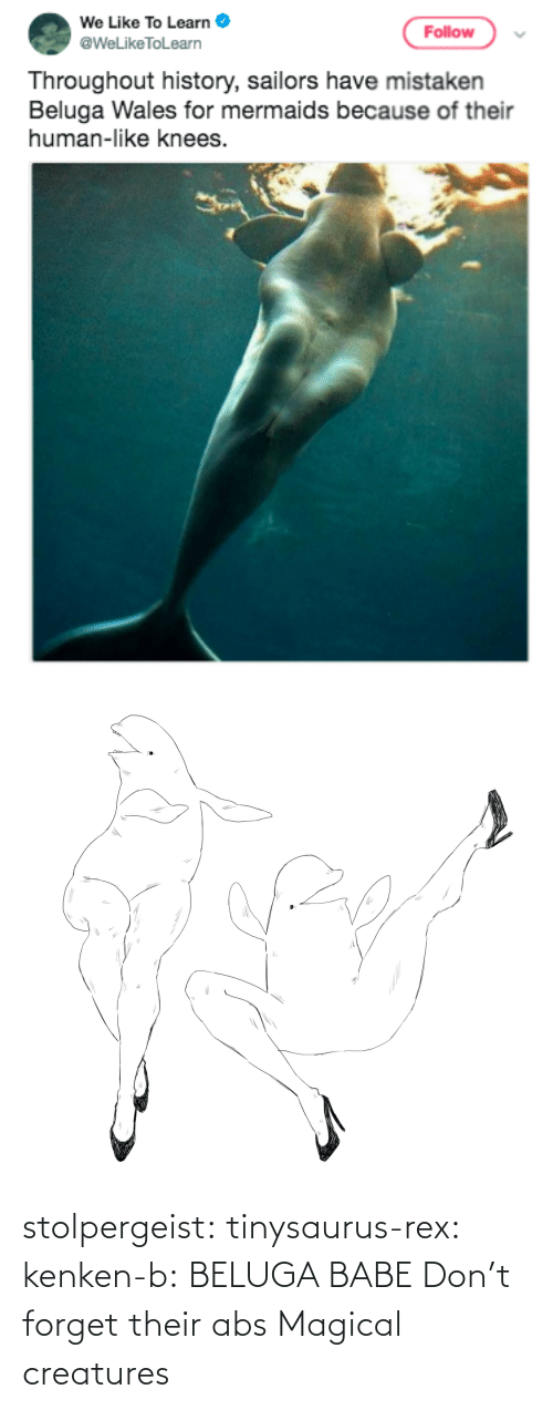 Height: stolpergeist: tinysaurus-rex:  kenken-b: BELUGA BABE Don't forget their abs  Magical creatures