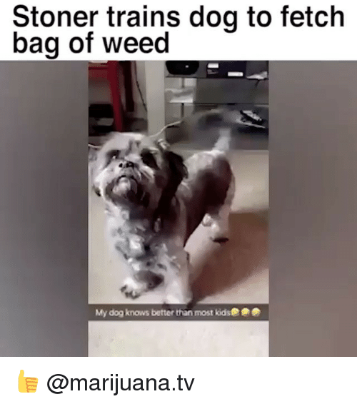 Memes, Weed, and Kids: Stoner trains doq to fetch  bag of weed  My dog knows better than most kids 👍 @marijuana.tv