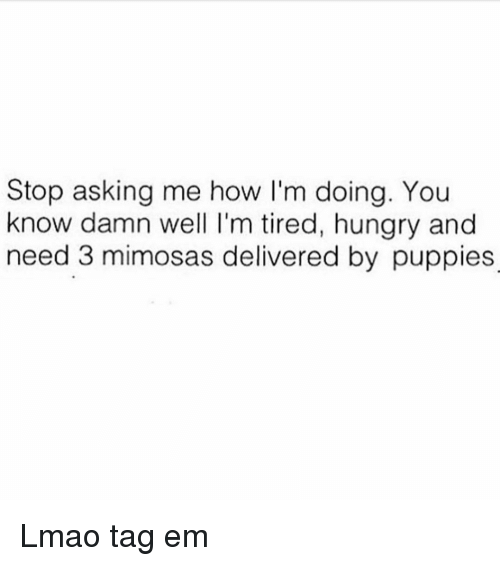 Funny, Hungry, and Puppies: Stop asking me how I'm doing. You  know damn well I'm tired, hungry and  need 3 mimosas delivered by puppies Lmao tag em