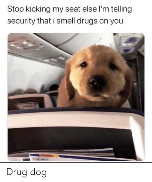 else: Stop kicking my seat else l'm telling  security that i smell drugs on you  W451-68/1T Drug dog