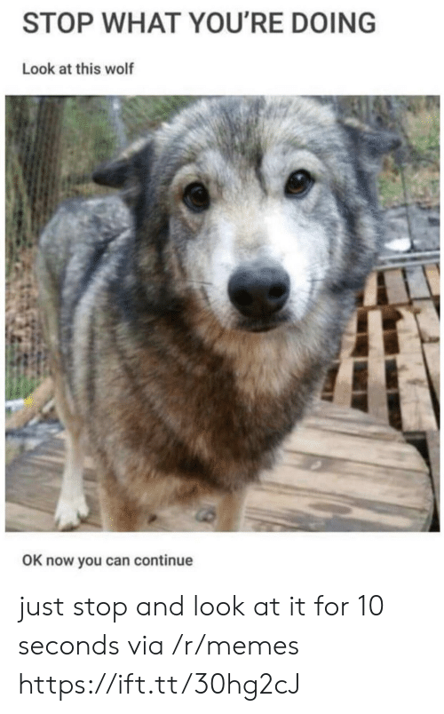 Memes, Wolf, and Can: STOP WHAT YOU'RE DOING  Look at this wolf  OK now you can continue just stop and look at it for 10 seconds via /r/memes https://ift.tt/30hg2cJ