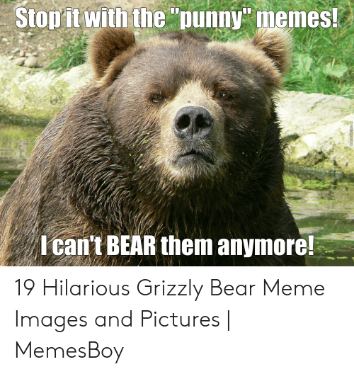 "Memesboy: Stopit with the ""punny memes!  I can't BEAR them anymore!  MemeCenter.com 19 Hilarious Grizzly Bear Meme Images and Pictures 
