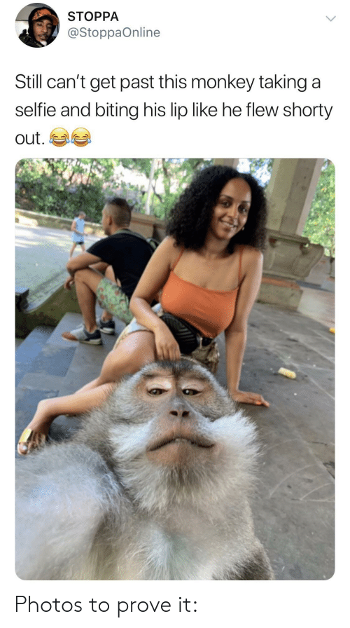 Monkey, Photos, and Still: STOPPA  @StoppaOnline  Still can't get past this monkey taking a  seltie and biting his lip like he flew shorty  out Photos to prove it: