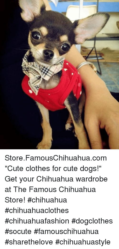 """cute dogs: Store.FamousChihuahua.com """"Cute clothes for cute dogs!"""" Get your Chihuahua wardrobe at The Famous Chihuahua Store! #chihuahua #chihuahuaclothes #chihuahuafashion #dogclothes #socute #famouschihuahua #sharethelove #chihuahuastyle"""