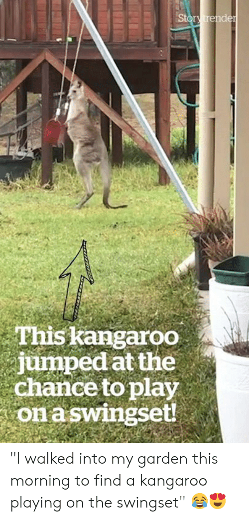 "kangaroo: Story trender  This kangaroo  jumped at the  chance to play  on aswingset! ""I walked into my garden this morning to find a kangaroo playing on the swingset"" 😂😍"