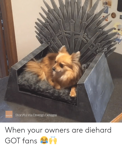 Got, Via, and Diehard: Storyful via Divergn Designs When your owners are diehard GOT fans 😂🙌