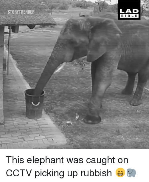 rubbish: STORYTRENDER  LAD  BIBL E This elephant was caught on CCTV picking up rubbish 😁🐘