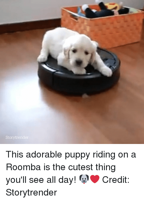 Roomba, Puppy, and Adorable: Storytrender This adorable puppy riding on a Roomba is the cutest thing you'll see all day! 🐶❤️  Credit: Storytrender