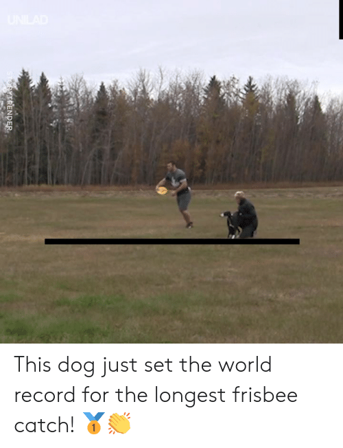 Dank, Record, and World: STORYTRENDER This dog just set the world record for the longest frisbee catch! 🥇👏