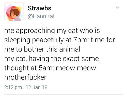Animal, Time, and Sleeping: Strawbs  @HannKat  me approaching my cat who is  sleeping peacefully at 7pm: time for  me to bother this animal  my cat, having the exact same  thought at 5am: meow meow  motherfucker  2:12 pm 12 Jan 18