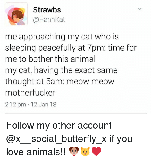 Who Is Sleeping: Strawbs  @HannKat  me approaching my cat who is  sleeping peacefully at 7pm: time for  me to bother this animal  my cat, having the exact same  thought at 5am: meow meow  motherfucker  2:12 pm 12 Jan 18 Follow my other account @x__social_butterfly_x if you love animals!! 🐶🐱❤