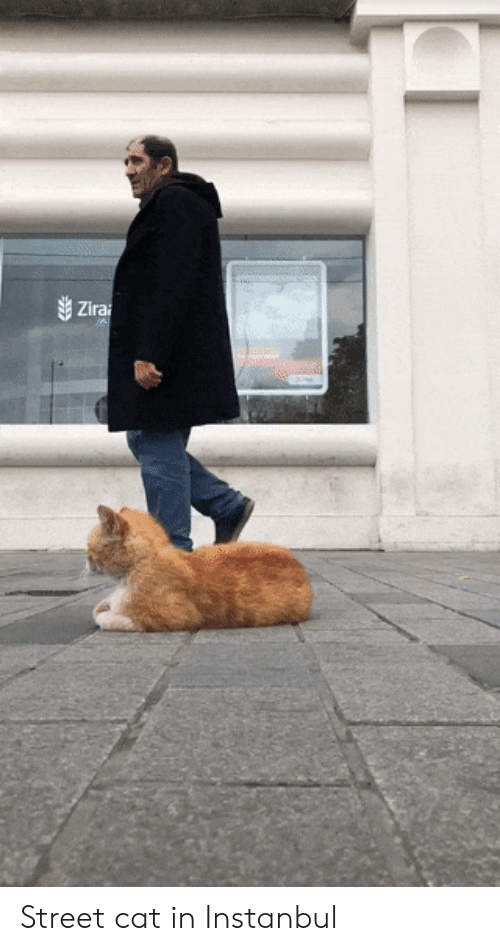 Cat and Street: Street cat in Instanbul