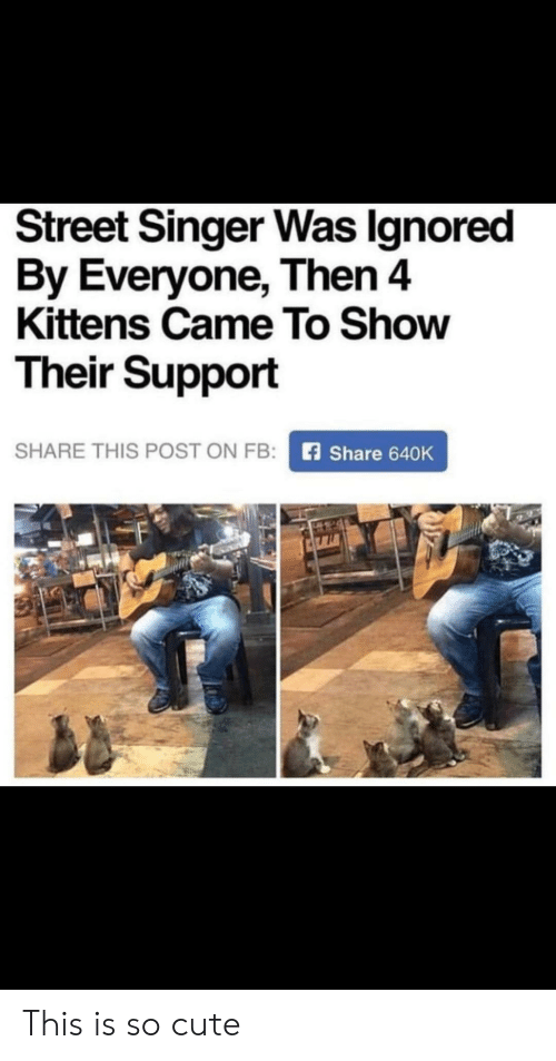 Kittens: Street Singer Was Ignored  By Everyone, Then 4  Kittens Came To Show  Their Support  SHARE THIS POST ON FB:  Share 640K This is so cute