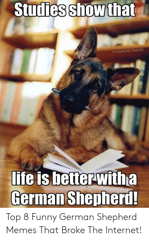 Funny, Internet, and Life: Studies show that  Faceliook.com/TheGSDC  life is betterwitha  German Shepherd! Top 8 Funny German Shepherd Memes That Broke The Internet!