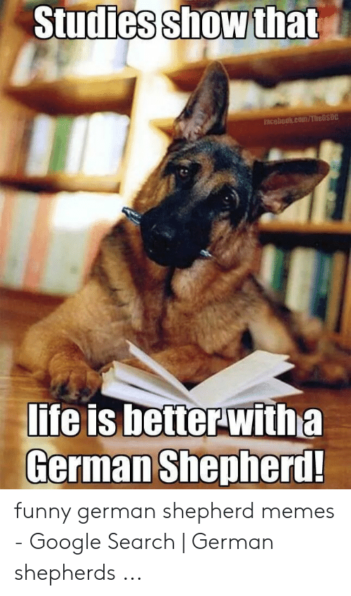 Funny, Google, and Memes: Studies show that  Faceliook.com/TheGSDC  lite is better-witha  German Shepherd! funny german shepherd memes - Google Search | German shepherds ...