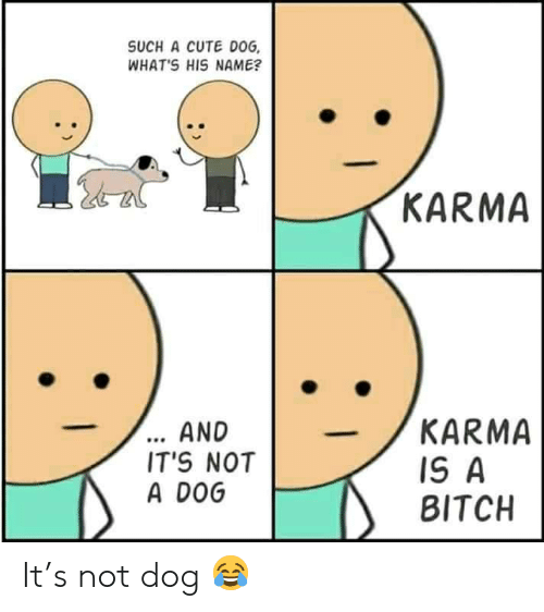 Bitch, Cute, and Karma: SUCH A CUTE DOG  WHAT'S HIS NAME?  KARMA  ... AND  IT'S NOT  A DOG  KARMA  IS A  BITCH It's not dog 😂
