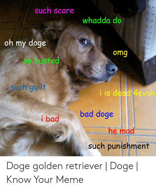 Bad, Doge, and Meme: such scare  whadda do  oh my doge  omg  so busted  such guilt  iis dead 4evah  bad doge  i bad  he mad  such punishment Doge golden retriever   Doge   Know Your Meme