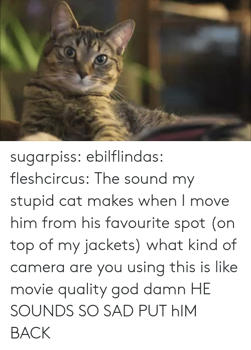 God, Target, and Tumblr: sugarpiss: ebilflindas:  fleshcircus:  The sound my stupid cat makes when I move him from his favourite spot (on top of my jackets)  what kind of camera are you using this is like movie quality god damn   HE SOUNDS SO SAD PUT hIM BACK