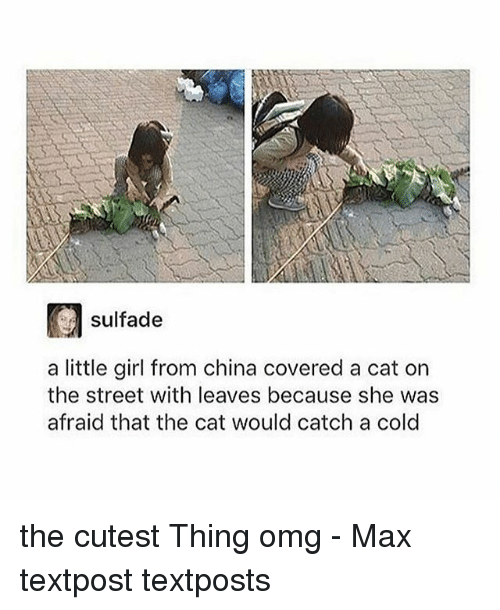 Memes, Omg, and China: sulfade  a little girl from china covered a cat on  the street with leaves because she was  afraid that the cat would catch a cold the cutest Thing omg - Max textpost textposts