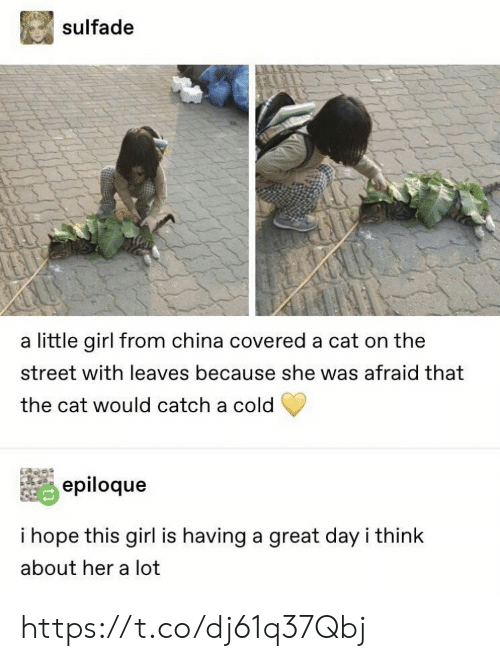 Memes, China, and Girl: sulfade  a little girl from china covered a cat on the  street with leaves because she was afraid that  the cat would catch a cold  epiloque  i hope this girl is having a great day i think  about her a lot https://t.co/dj61q37Qbj