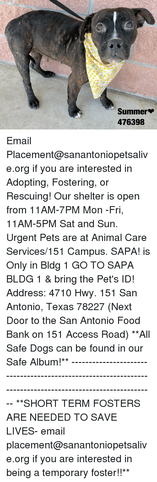 Dogs, Food, and Memes: Summer*  476398 Email Placement@sanantoniopetsalive.org if you are interested in Adopting, Fostering, or Rescuing!  Our shelter is open from 11AM-7PM Mon -Fri, 11AM-5PM Sat and Sun.  Urgent Pets are at Animal Care Services/151 Campus. SAPA! is Only in Bldg 1 GO TO SAPA BLDG 1 & bring the Pet's ID! Address: 4710 Hwy. 151 San Antonio, Texas 78227 (Next Door to the San Antonio Food Bank on 151 Access Road)  **All Safe Dogs can be found in our Safe Album!** ---------------------------------------------------------------------------------------------------------- **SHORT TERM FOSTERS ARE NEEDED TO SAVE LIVES- email placement@sanantoniopetsalive.org if you are interested in being a temporary foster!!**