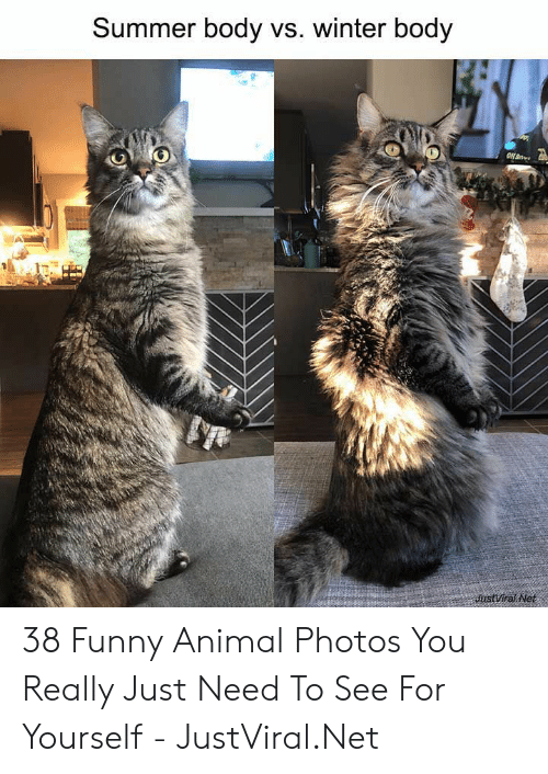Summer Body: Summer body vs. winter body  JustViral Net 38 Funny Animal Photos You Really Just Need To See For Yourself - JustViral.Net