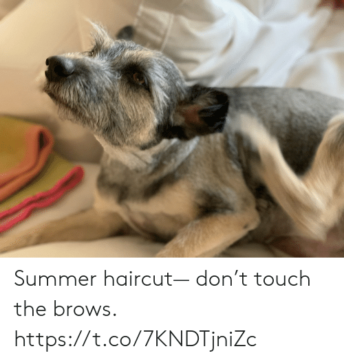 Brows: Summer haircut— don't touch the brows. https://t.co/7KNDTjniZc