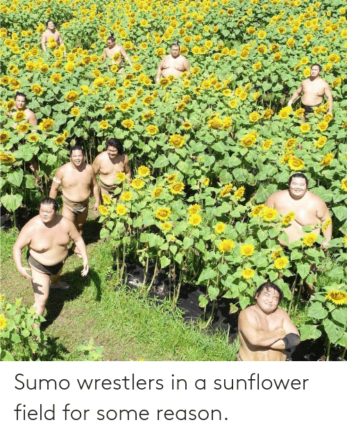 sumo: Sumo wrestlers in a sunflower field for some reason.