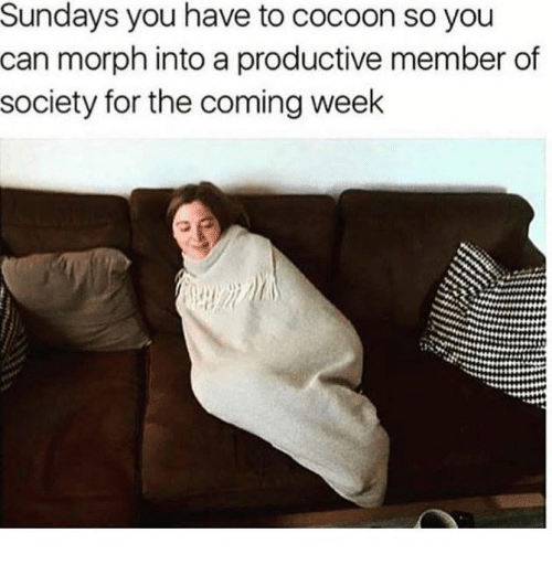Morphing: Sundays you have to cocoon so you  can morph into a productive member of  society for the coming week