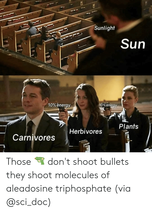 Energy, Memes, and 🤖: Sunlight  Sun  10% energy  10% energ  Plants  Herbivores  Carnivores Those 🔫 don't shoot bullets they shoot molecules of aleadosine triphosphate (via @sci_doc)