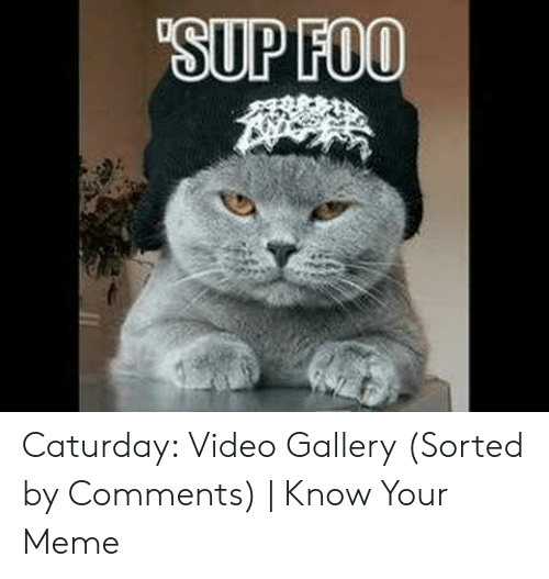 Caturday Meme: SUP FOO Caturday: Video Gallery (Sorted by Comments) | Know Your Meme