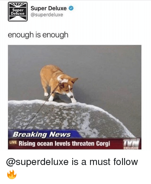 corgy: Super Deluxe  Super  Deluxe  Super deluxe  enough is enough  Breaking News  LIVE  Rising ocean levels threaten Corgi  TMM  EXCLUS @superdeluxe is a must follow 🔥
