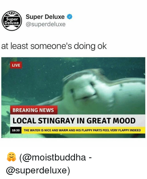Nicee: Super  Deluxe )  Super Deluxe  xe@superdeluxe  at least someone's doing ok  LIVE  BREAKING NEWS  LOCAL STINGRAY IN GREAT MOOD  18:30  THE WATER IS NICE AND WARM AND HIS FLAPPY PARTS FEEL VERY FLAPPY INDEED 🤗 (@moistbuddha - @superdeluxe)