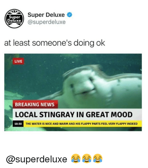 Memes, Mood, and News: Super Deluxe  xe@superdeluxe  Super  Deluxe  at least someone's doing ok  LIVE  BREAKING NEWS  LOCAL STINGRAY IN GREAT MOOD  18:30  THE WATER IS NICE AND WARM AND HIS FLAPPY PARTS FEEL VERY FLAPPY INDEED @superdeluxe 😂😂😂