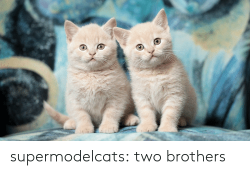 Tumblr, Blog, and Com: supermodelcats:  two brothers