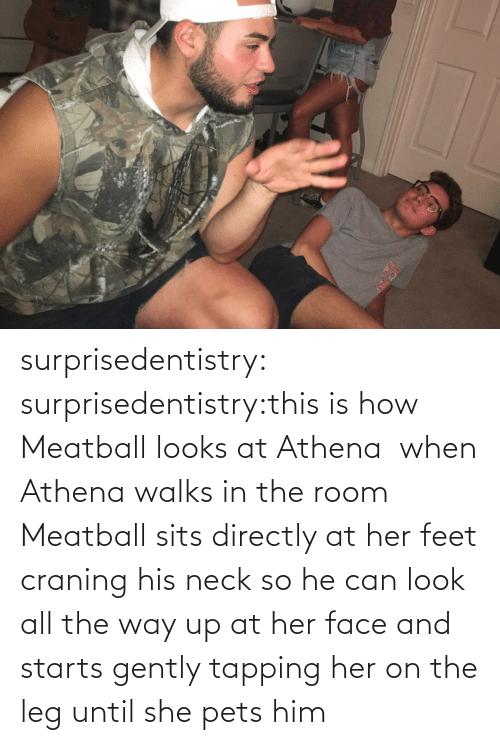 feet: surprisedentistry:  surprisedentistry:this is how Meatball looks at Athena  when Athena walks in the room Meatball sits directly at her feet craning his neck so he can look all the way up at her face and starts gently tapping her on the leg until she pets him