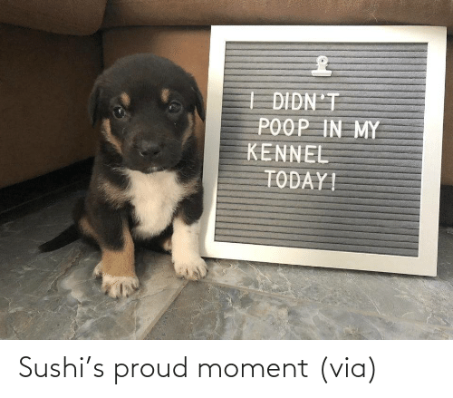 moment: Sushi's proud moment (via)