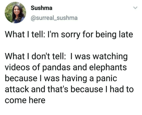 Sorry, Videos, and Elephants: Sushma  @surreal_sushma  What I tell: I'm sorry for being late  What I don't tell: I was watching  videos of pandas and elephants  because I was having a panic  attack and that's because I had to  come here