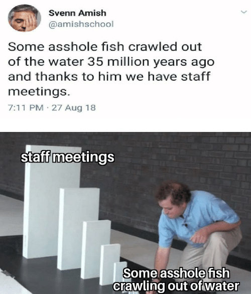 staff: Svenn Amish  @amishschool  Some asshole fish crawled out  of the water 35 million years ago  and thanks to him we have staff  meetings.  7:11 PM 27 Aug 18  staff meetings  Some asshole fish  crawling out of water