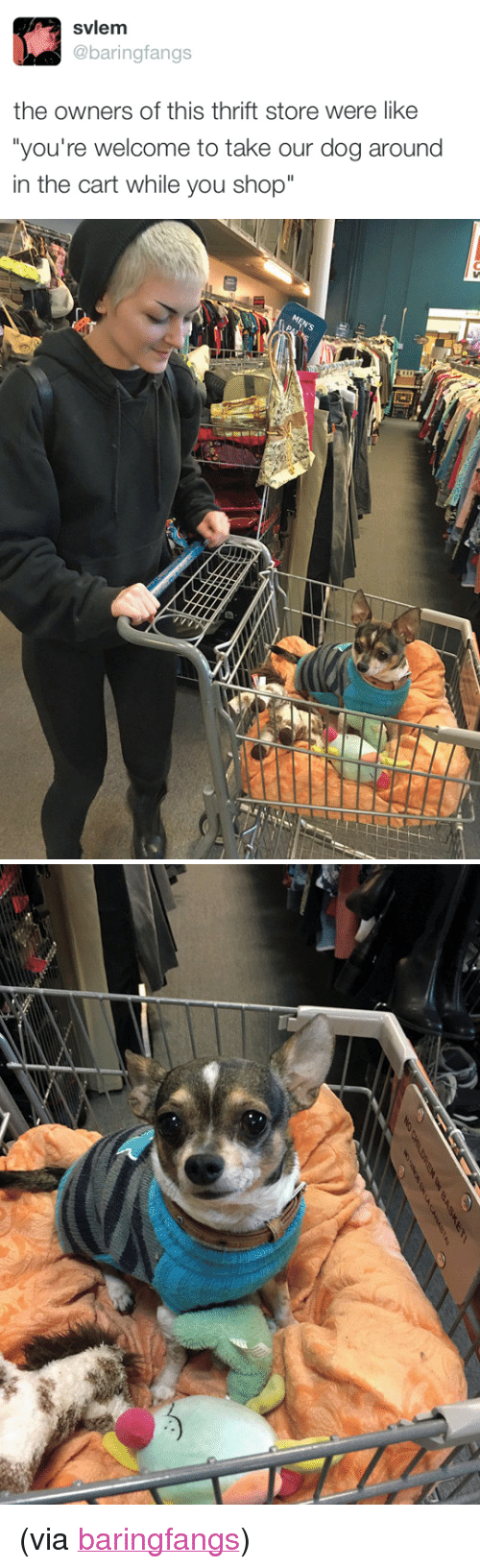 """Target, Twitter, and Blank: svlem  @baringfangs  the owners of this thrift store were like  you're welcome to take our dog around  in the cart while you shop"""" <p>(via <a href=""""https://twitter.com/baringfangs"""" target=""""_blank"""">baringfangs</a>)<br/></p>"""