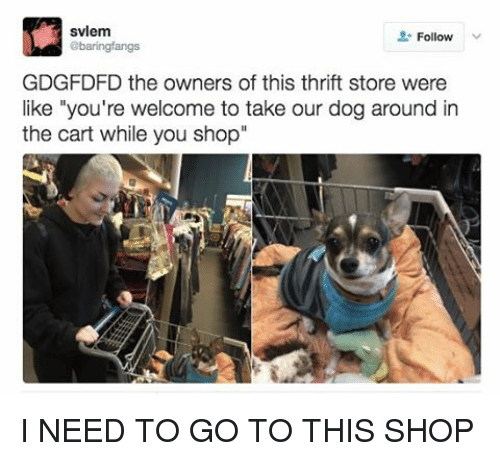 """Relatable, Thrift Store, and Youre Welcome: svlem  Follow  abaringfangs  GDGFDFD the owners of this thrift store were  like """"you're welcome to take our dog around in  the cart while you shop I NEED TO GO TO THIS SHOP"""
