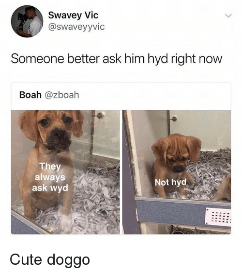 Cute, Memes, and Wyd: Swavey Vic  @swaveyyvic  Someone better ask him hyd right now  Boah @zboah  They  always  ask wyd  Not hyd Cute doggo