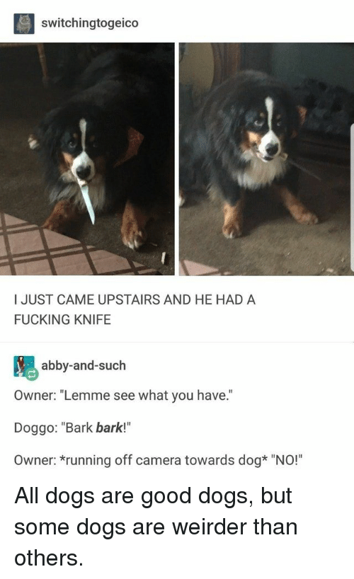 "Dogs, Fucking, and Camera: switchingtogeico  I JUST CAME UPSTAIRS AND HE HAD A  FUCKING KNIFE  abby-and-such  Owner: ""Lemme see what you have.  Doggo: ""Bark bark!""  Owner: *running off camera towards dog* ""NO!"" All dogs are good dogs, but some dogs are weirder than others."