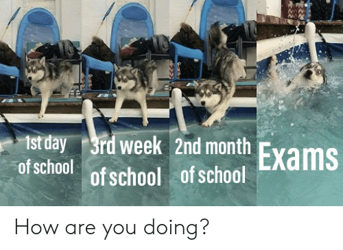 School, How, and Day: t day 3rd week 2nd month  Exams  of school  of school  of school How are you doing?
