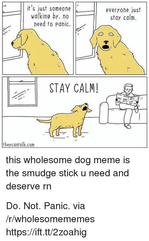 Meme, Wholesome, and Dog: T it's just someonJE  walking by. no  everyone)ust  stay calm.  need to Panic.  STAY CALM!  theycantalk.com  this wholesome dog meme is  the smudge stick u need and  deserve rn Do. Not. Panic. via /r/wholesomememes https://ift.tt/2zoahig