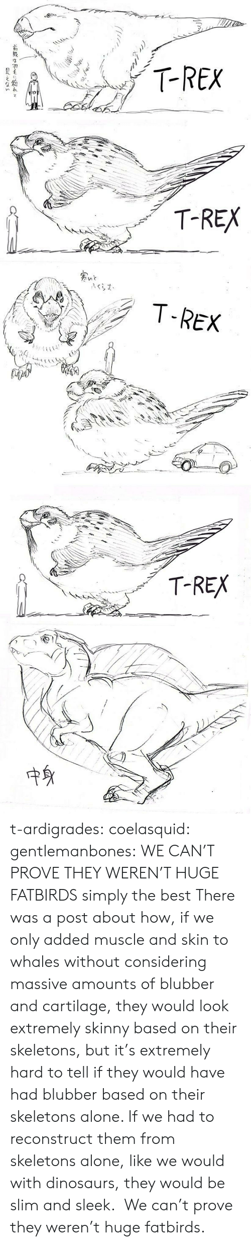 We Only: T-REX  FO   T-REX   T-REX  A   T-REX  中身 t-ardigrades:   coelasquid:  gentlemanbones: WE CAN'T PROVE THEY WEREN'T HUGE FATBIRDS simply the best  There was a post about how, if we only added muscle and skin to whales without considering massive amounts of blubber and cartilage, they would look extremely skinny based on their skeletons, but it's extremely hard to tell if they would have had blubber based on their skeletons alone. If we had to reconstruct them from skeletons alone, like we would with dinosaurs, they would be slim and sleek.  We can't prove they weren't huge fatbirds.