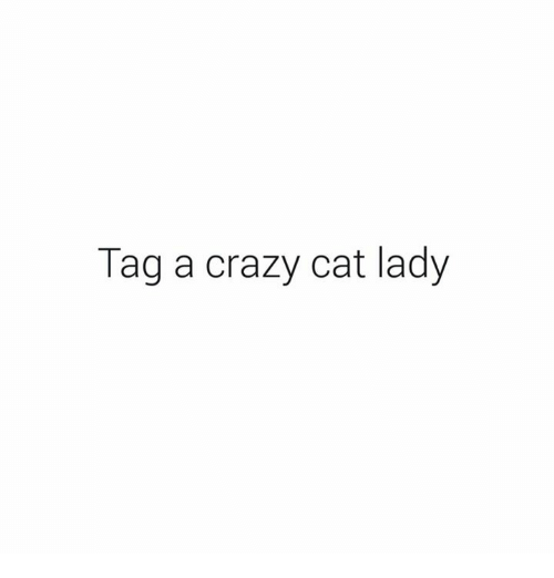 crazy cats: Tag a crazy cat lady