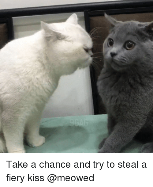 Memes, Kiss, and 🤖: Take a chance and try to steal a fiery kiss @meowed